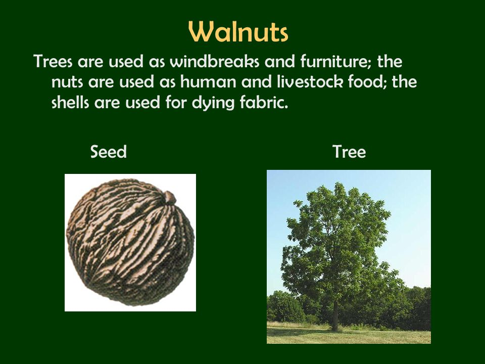 Walnuts Trees are used as windbreaks and furniture; the nuts are used as human and livestock food; the shells are used for dying fabric.