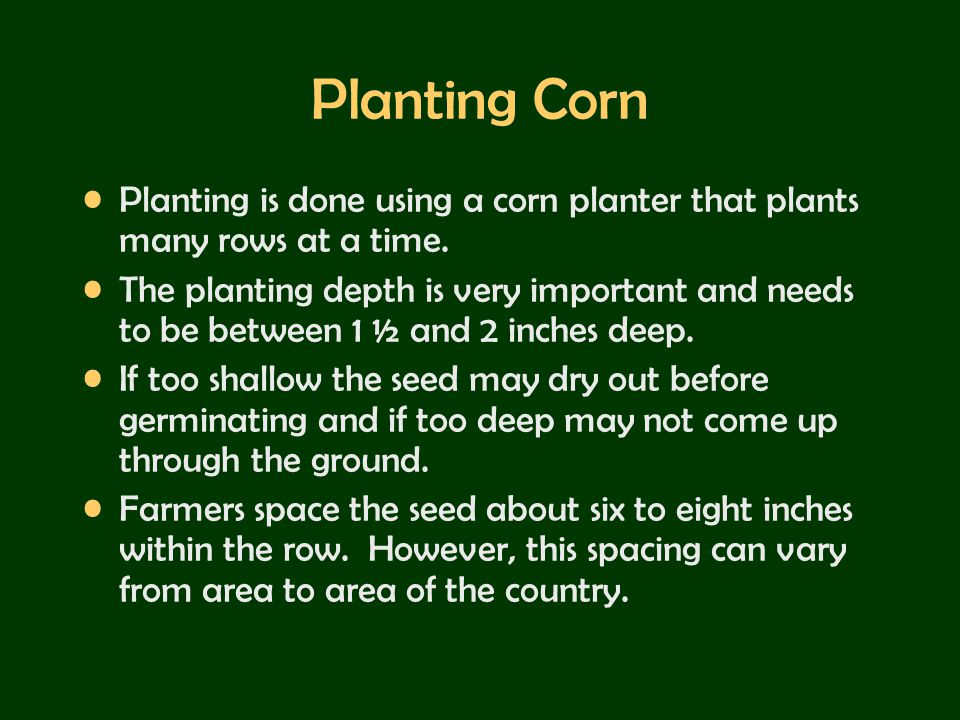 Planting Corn Planting is done using a corn planter that plants many rows at a time.
