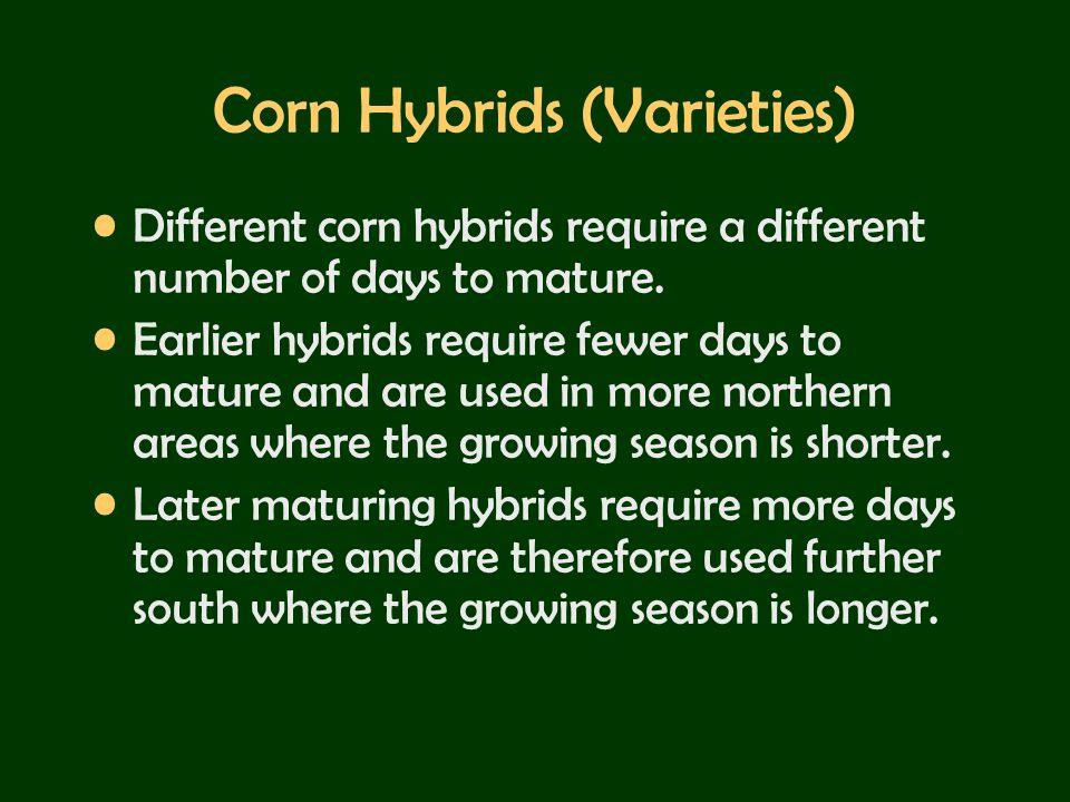 Corn Hybrids (Varieties)