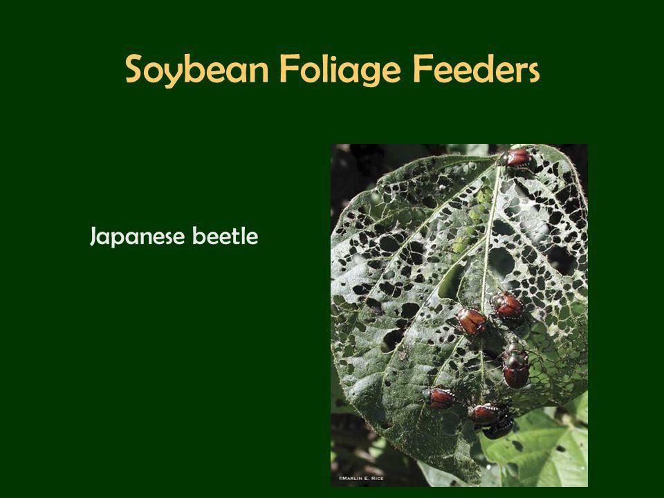 Soybean Foliage Feeders