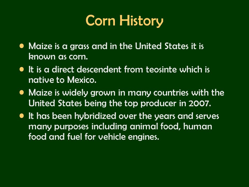 Corn History Maize is a grass and in the United States it is known as corn. It is a direct descendent from teosinte which is native to Mexico.