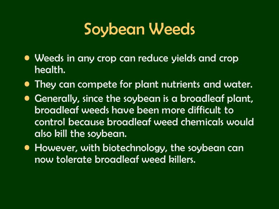 Soybean Weeds Weeds in any crop can reduce yields and crop health.