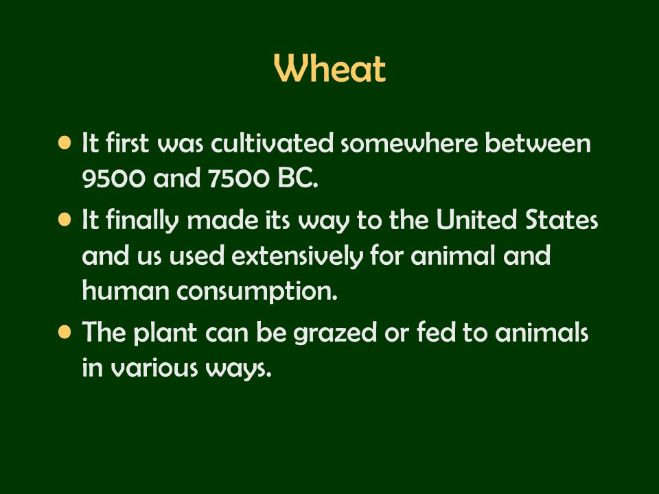 Wheat It first was cultivated somewhere between 9500 and 7500 BC.