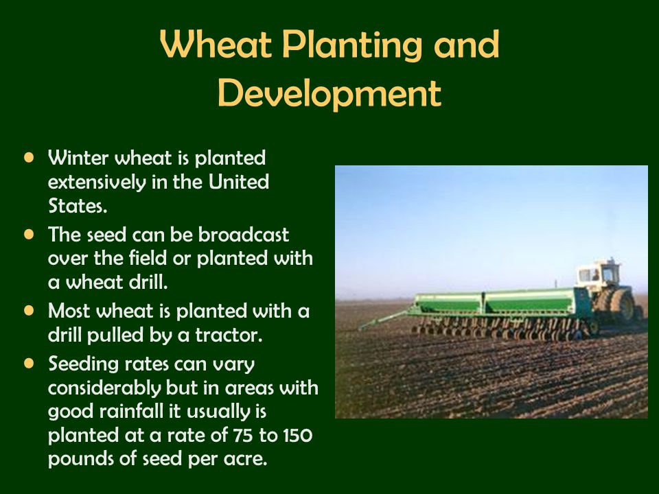 Wheat Planting and Development