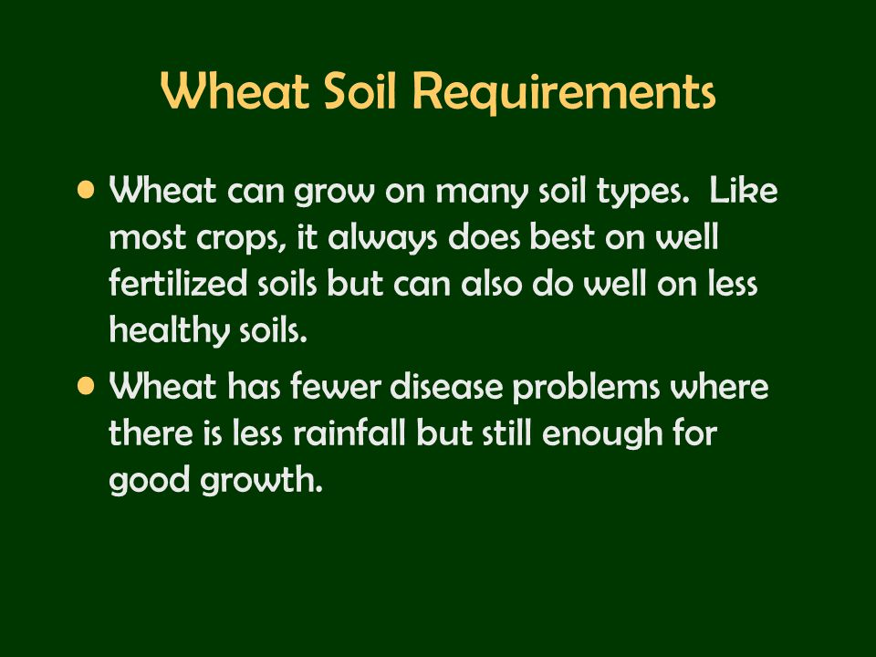 Wheat Soil Requirements