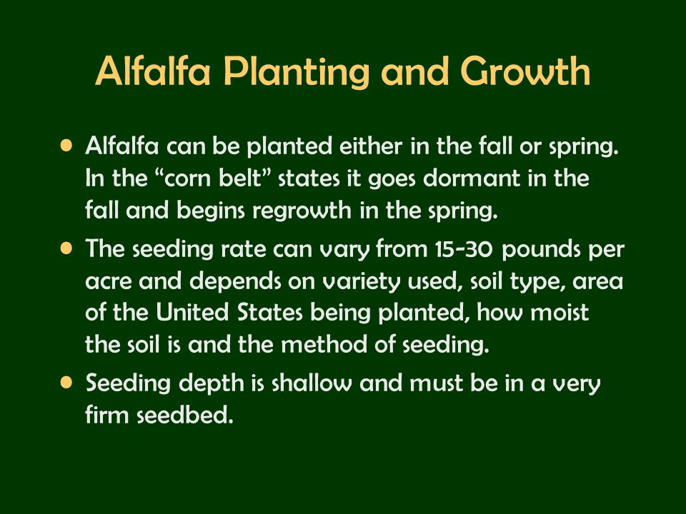 Alfalfa Planting and Growth
