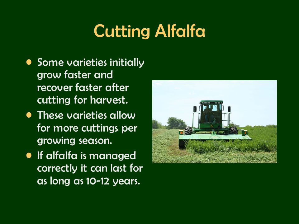Cutting Alfalfa Some varieties initially grow faster and recover faster after cutting for harvest.