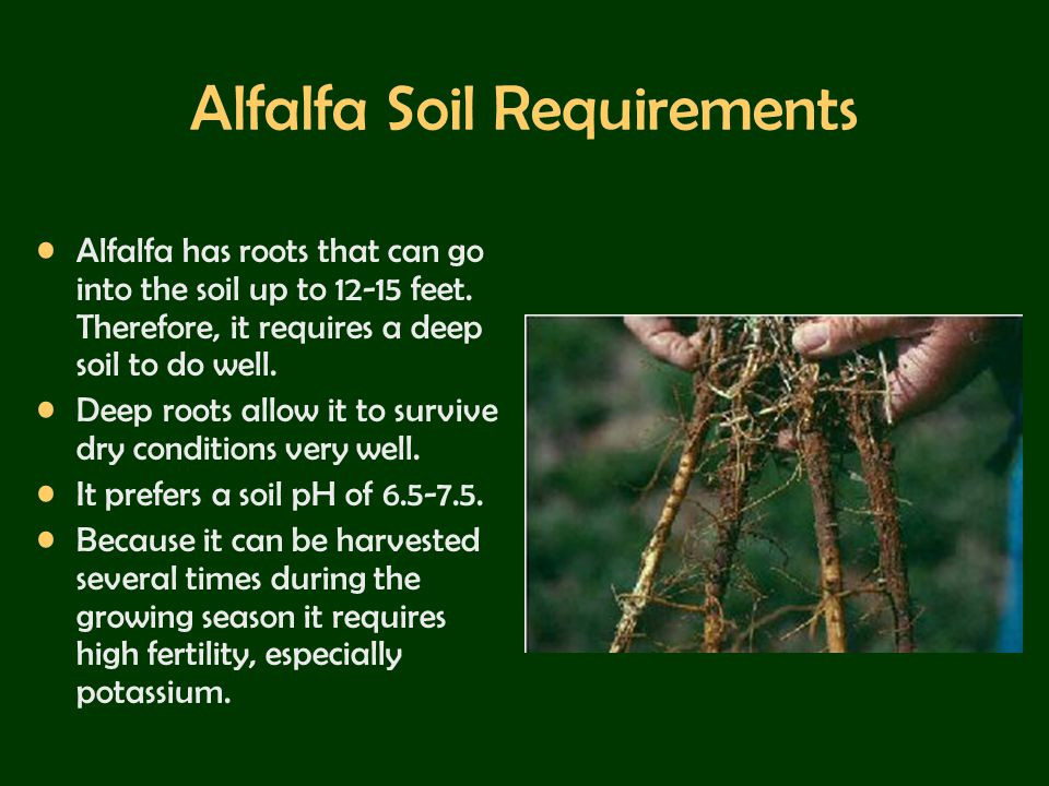 Alfalfa Soil Requirements