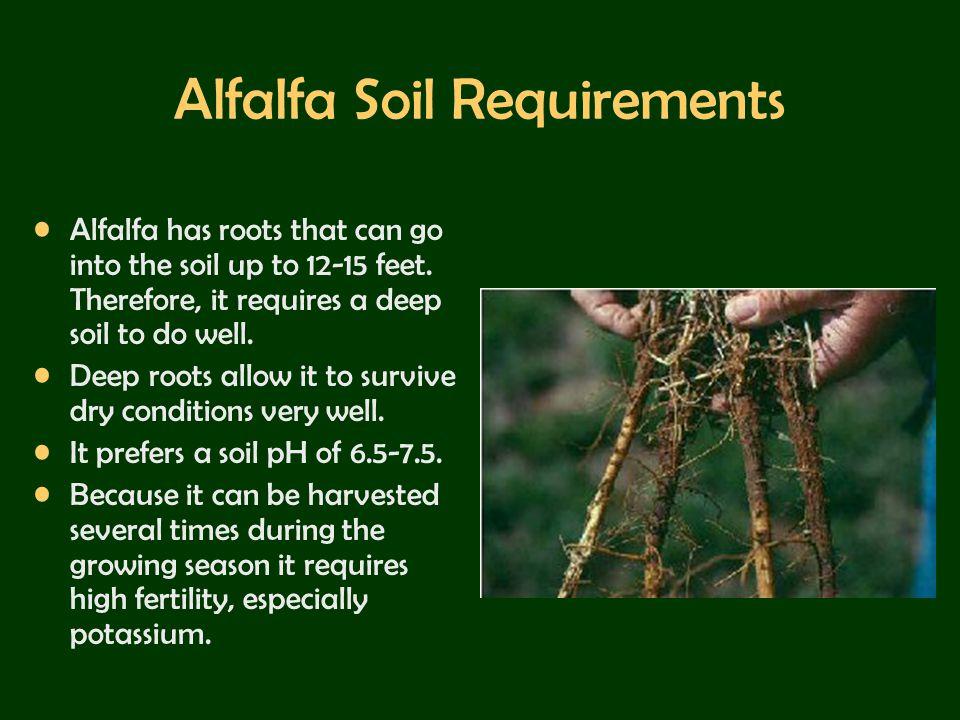 Alfalfa Soil Requirements