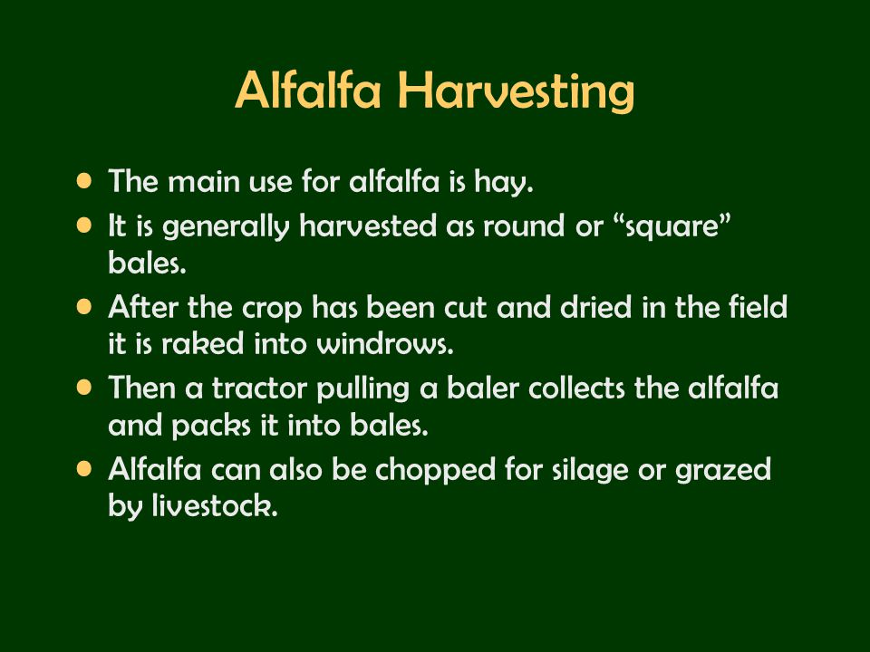 Alfalfa Harvesting The main use for alfalfa is hay.