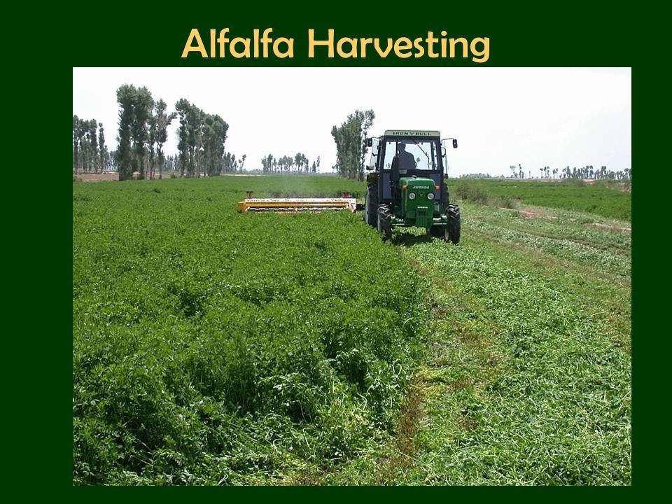 Alfalfa Harvesting