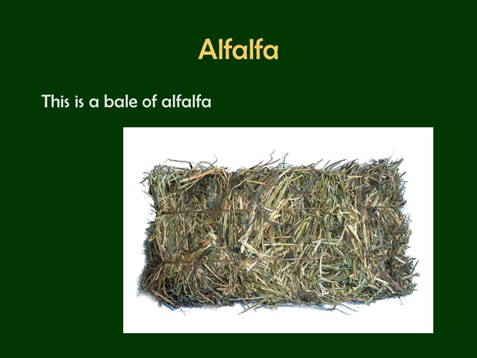 Alfalfa This is a bale of alfalfa