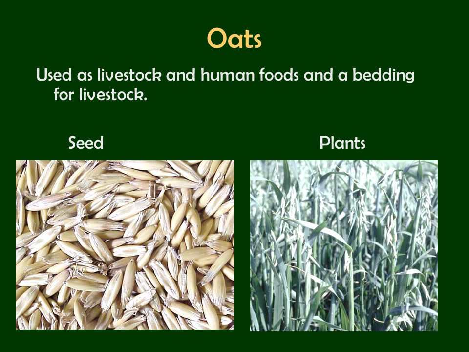 Oats Used as livestock and human foods and a bedding for livestock.