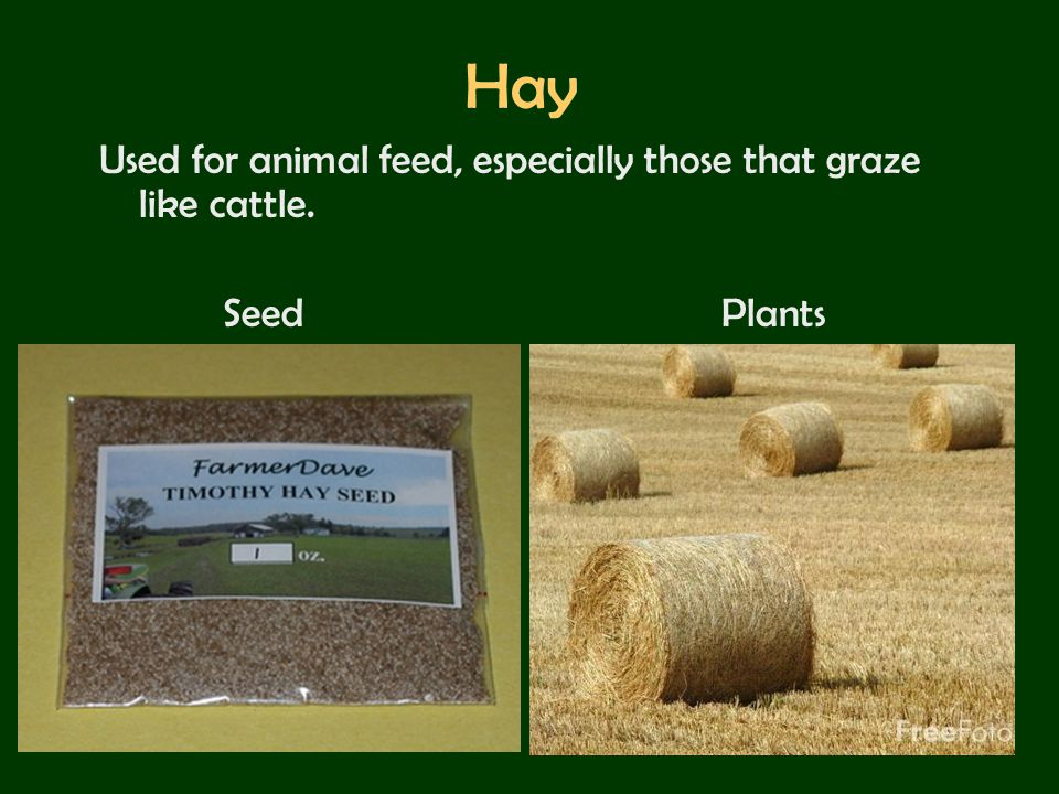 Hay Used for animal feed, especially those that graze like cattle.