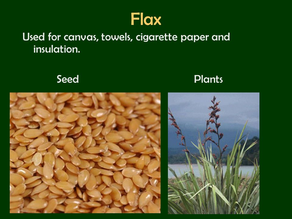 Flax Used for canvas, towels, cigarette paper and insulation.