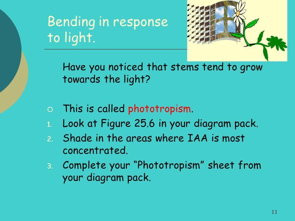 Bending in response to light.