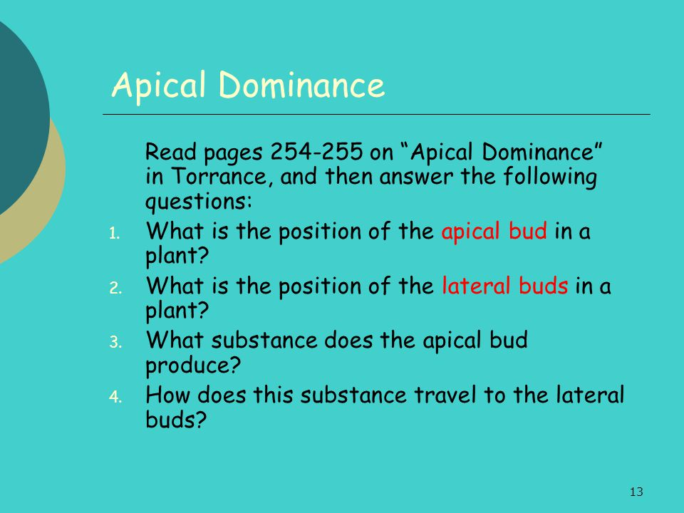Apical Dominance What is the position of the apical bud in a plant