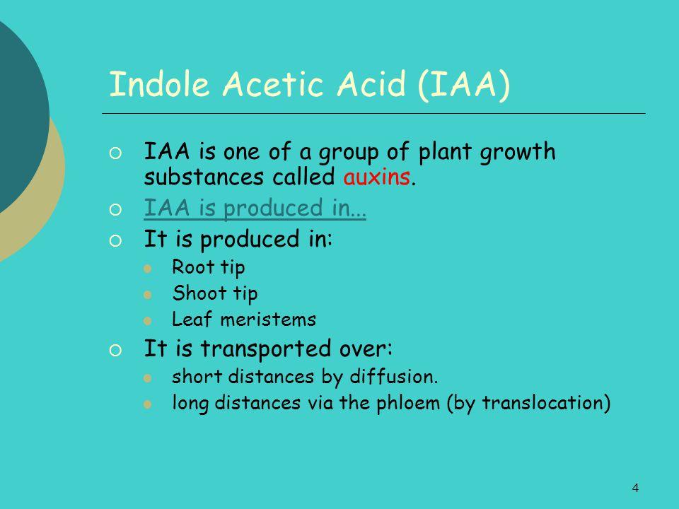 Indole Acetic Acid (IAA)