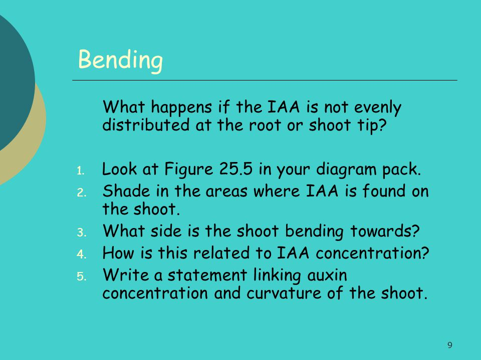 Bending What happens if the IAA is not evenly distributed at the root or shoot tip Look at Figure 25.5 in your diagram pack.