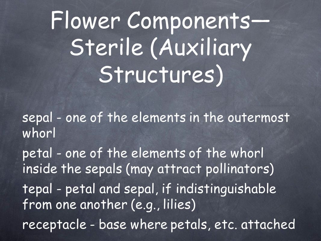Flower Components—Sterile (Auxiliary Structures)