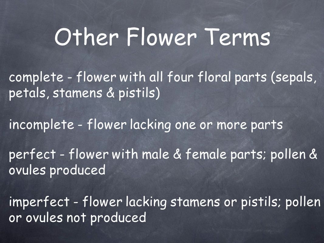 Other Flower Terms complete - flower with all four floral parts (sepals, petals, stamens & pistils)