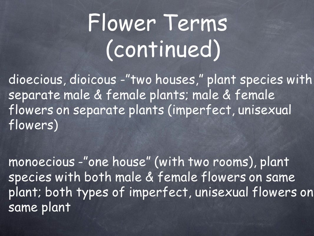 Flower Terms (continued)