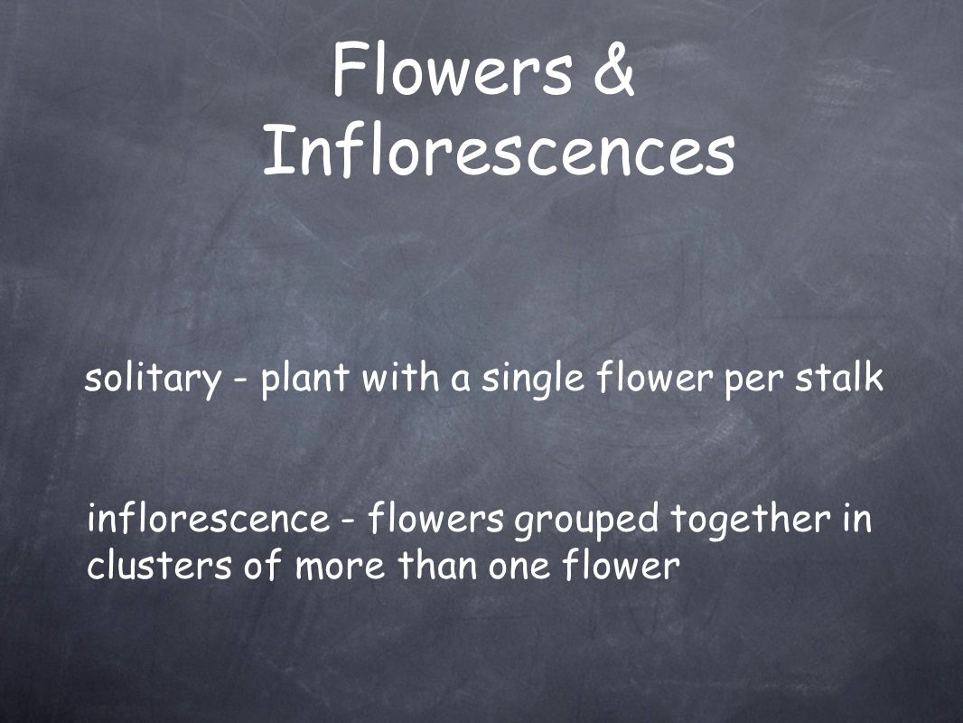 Flowers & Inflorescences