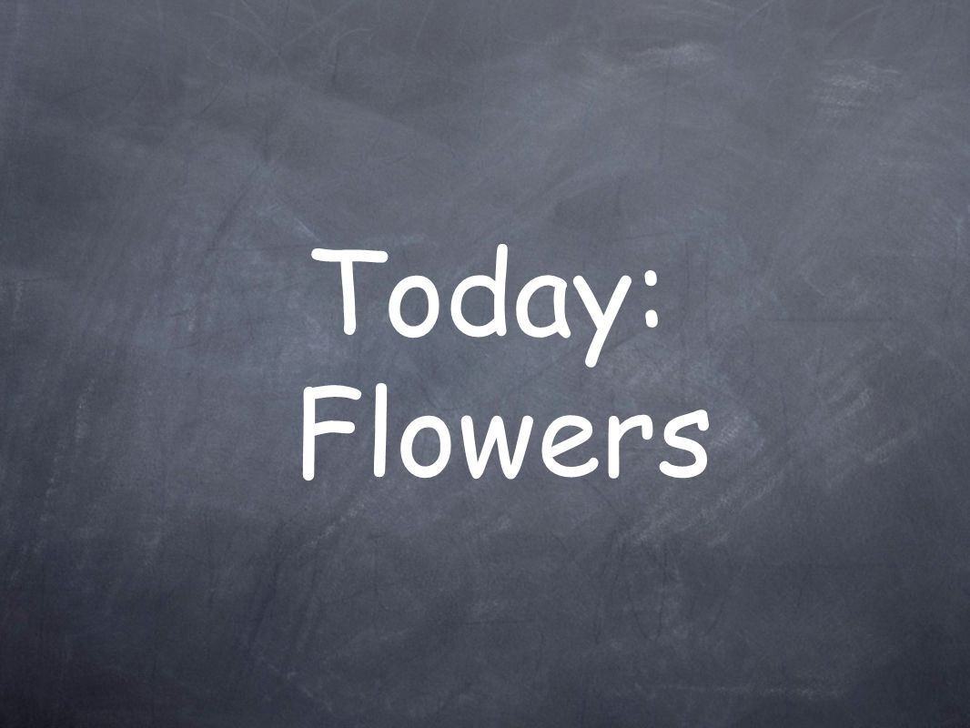 Today: Flowers