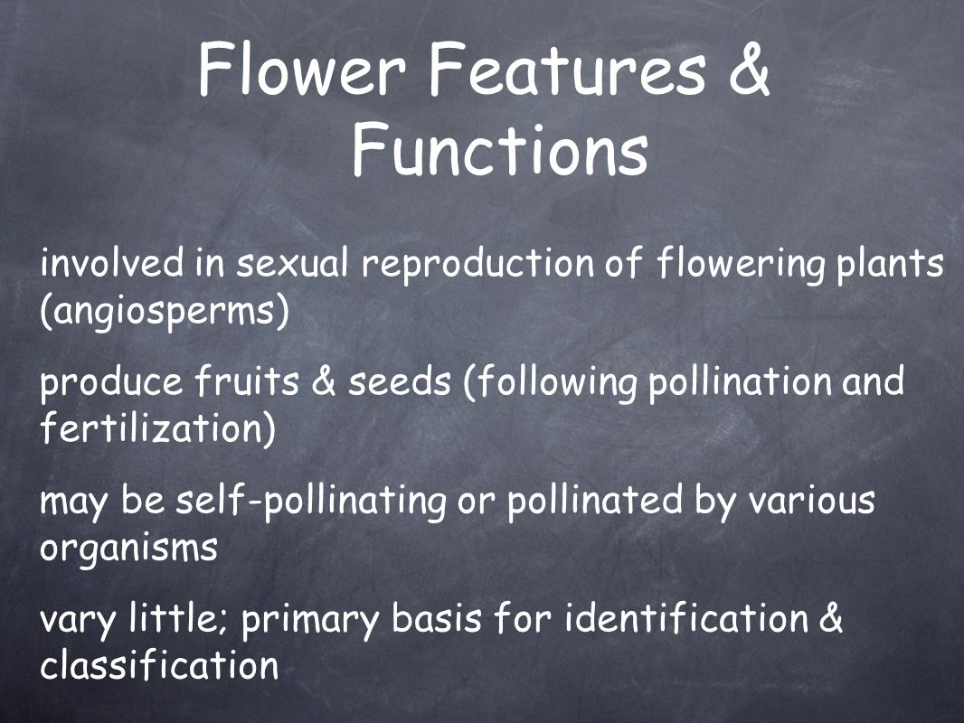 Flower Features & Functions