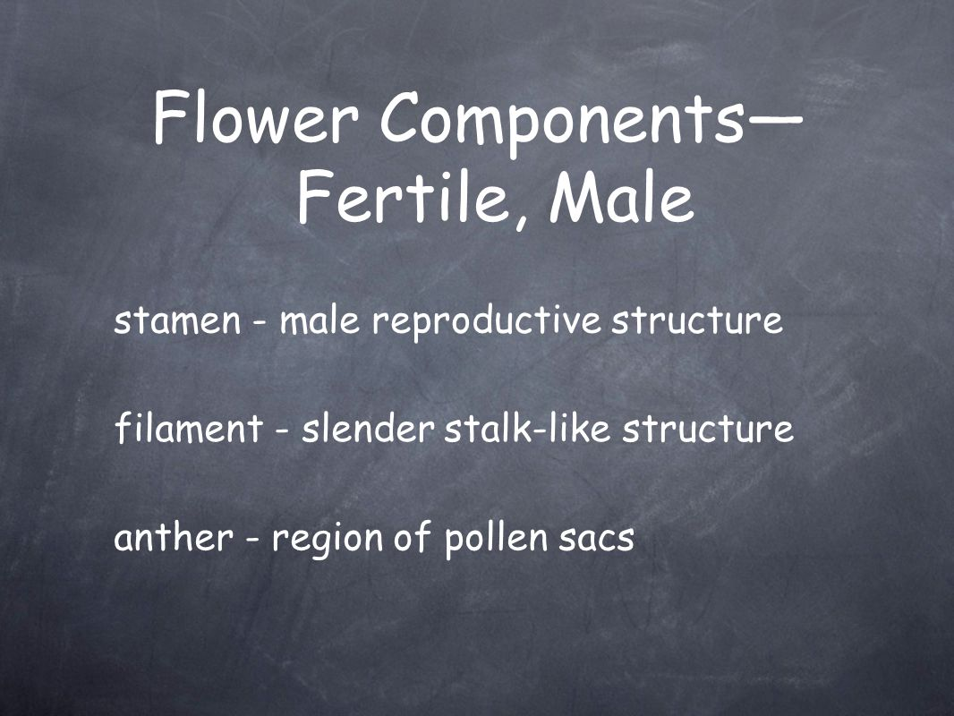 Flower Components—Fertile, Male