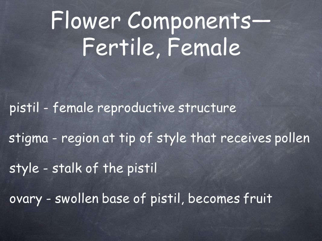 Flower Components—Fertile, Female