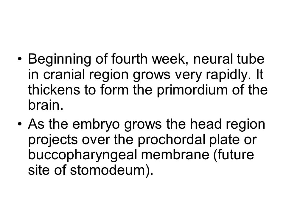 Beginning of fourth week, neural tube in cranial region grows very rapidly. It thickens to form the primordium of the brain.