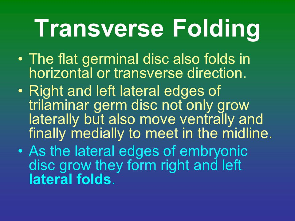 Transverse Folding The flat germinal disc also folds in horizontal or transverse direction.