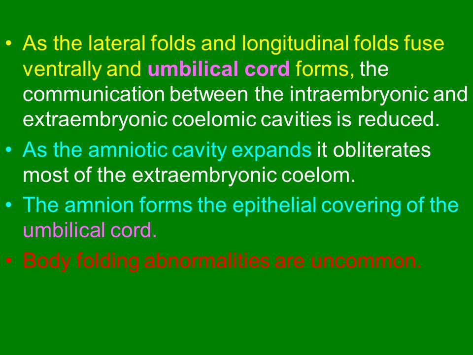 As the lateral folds and longitudinal folds fuse ventrally and umbilical cord forms, the communication between the intraembryonic and extraembryonic coelomic cavities is reduced.