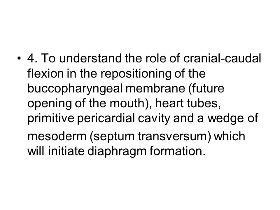 4. To understand the role of cranial-caudal flexion in the repositioning of the buccopharyngeal membrane (future opening of the mouth), heart tubes, primitive pericardial cavity and a wedge of