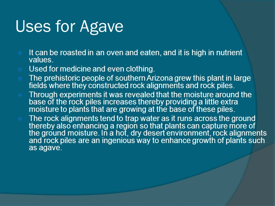 Uses for Agave It can be roasted in an oven and eaten, and it is high in nutrient values. Used for medicine and even clothing.