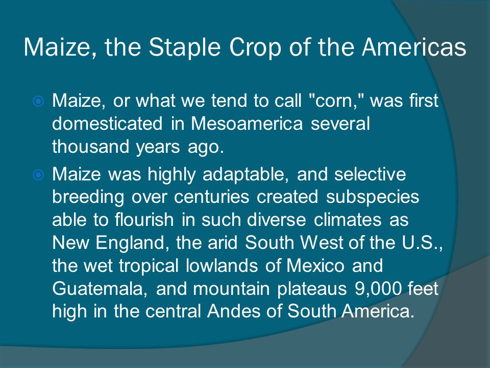 Maize, the Staple Crop of the Americas
