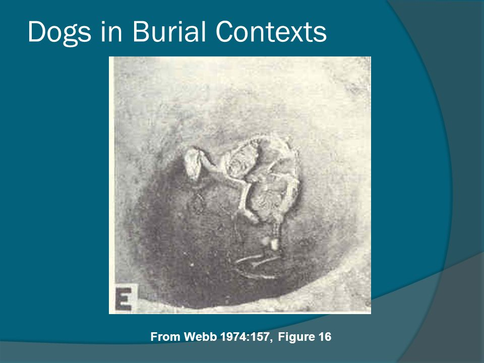 Dogs in Burial Contexts
