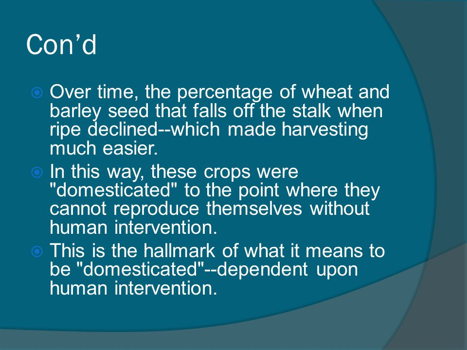 Con'd Over time, the percentage of wheat and barley seed that falls off the stalk when ripe declined--which made harvesting much easier.