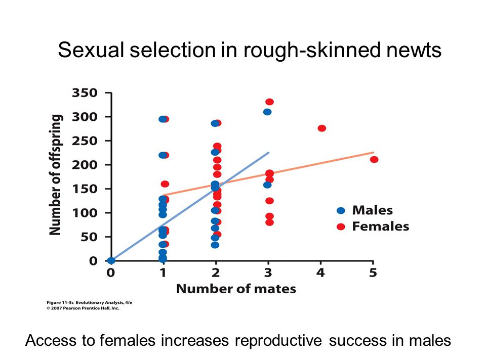 Sexual selection in rough-skinned newts