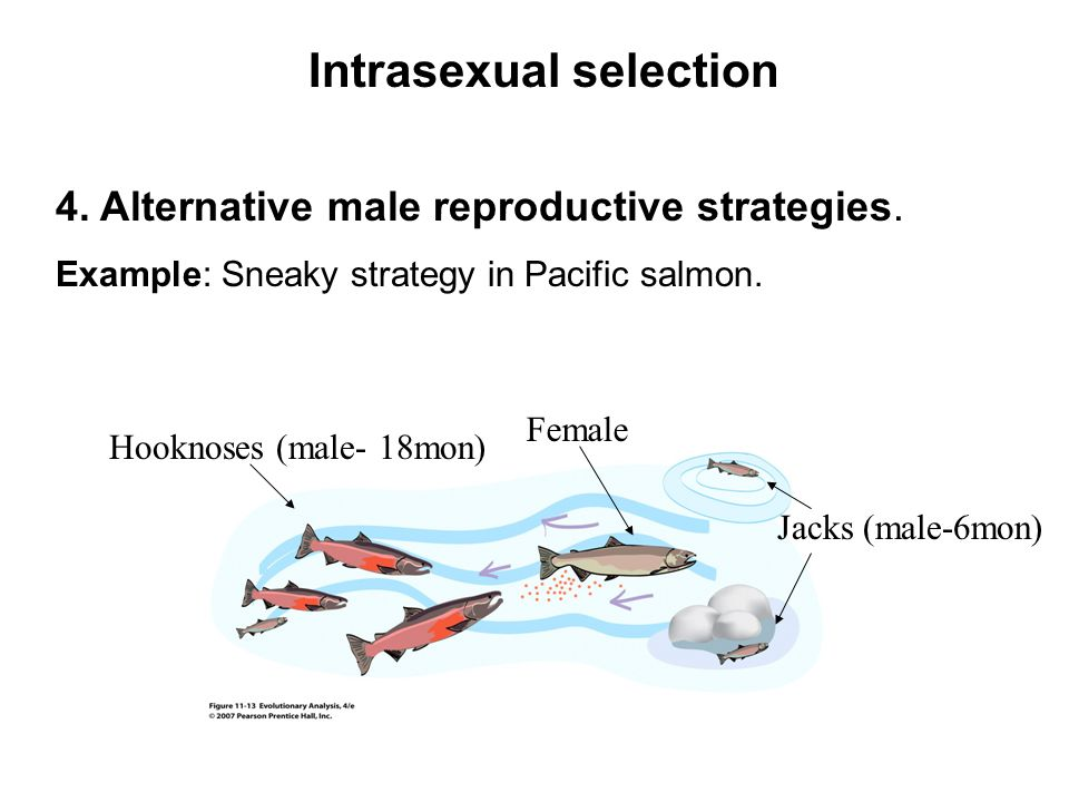 Intrasexual selection
