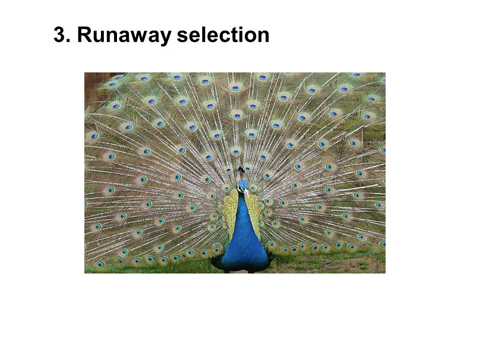 3. Runaway selection