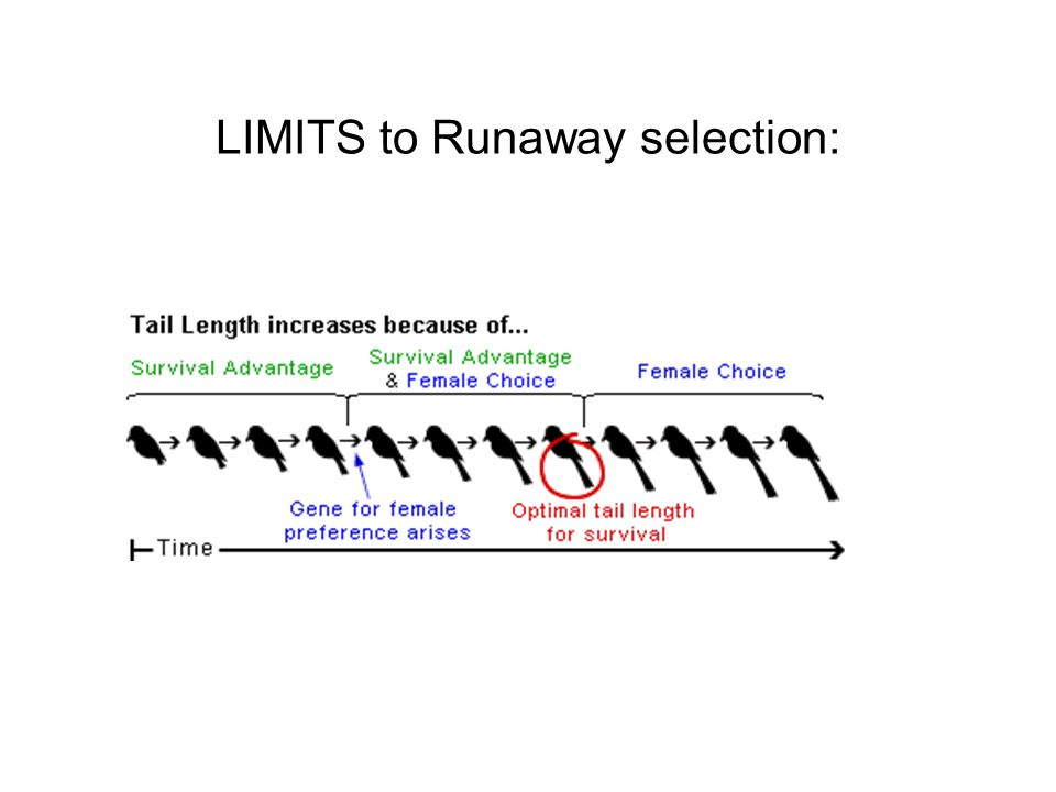 LIMITS to Runaway selection: