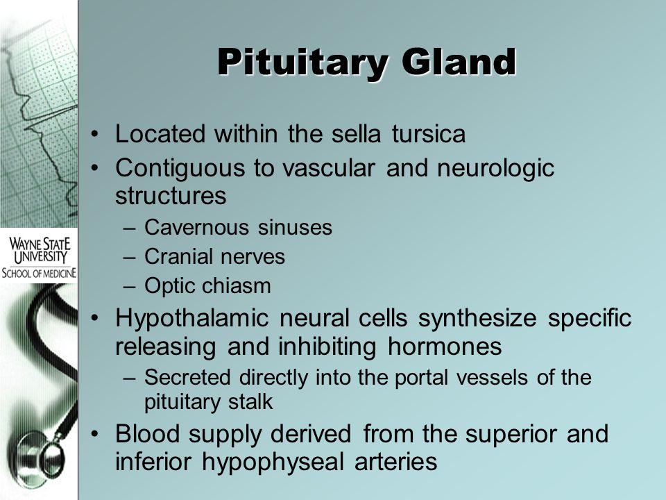 Pituitary Gland Located within the sella tursica