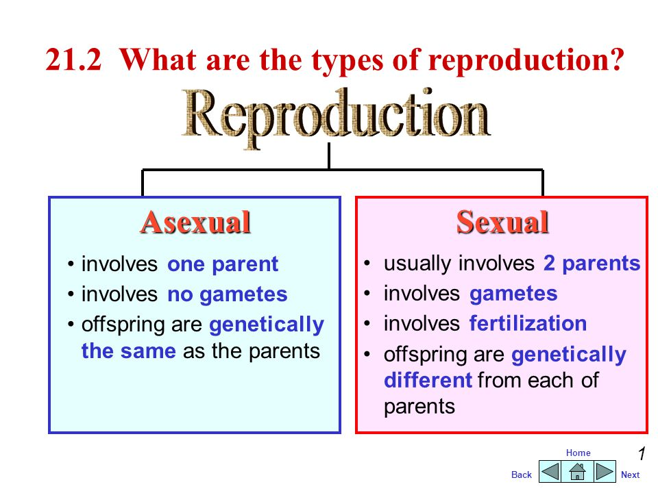 21.2 What are the types of reproduction