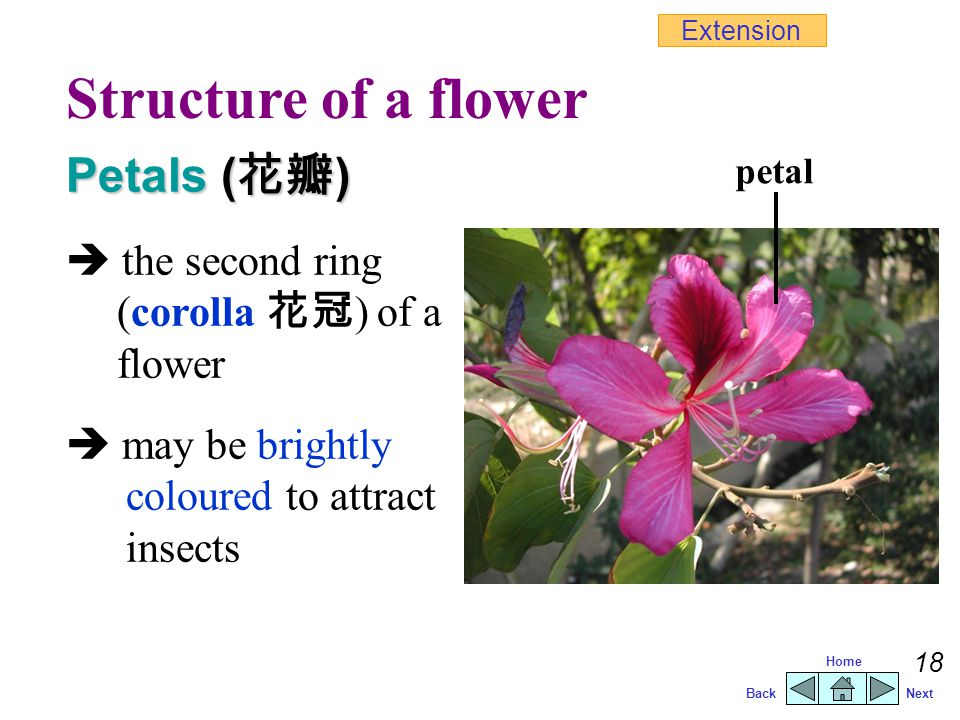 Structure of a flower Petals (花瓣)
