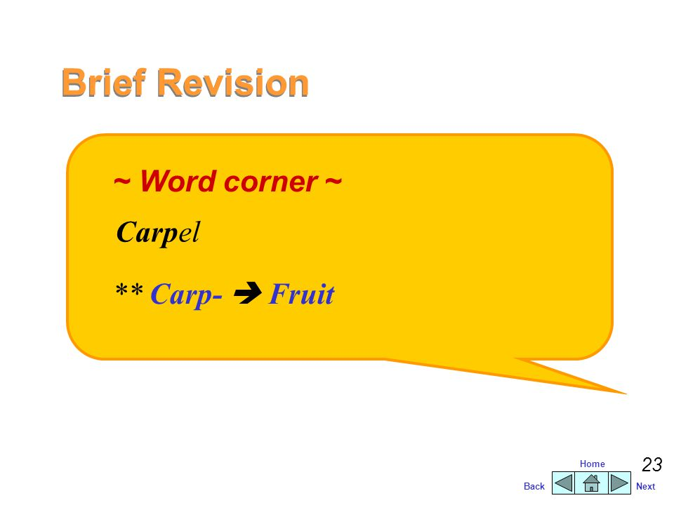 Brief Revision ~ Word corner ~ Carpel ** Carp-  Fruit