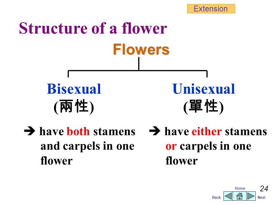 Structure of a flower Flowers Bisexual (兩性) Unisexual (單性)