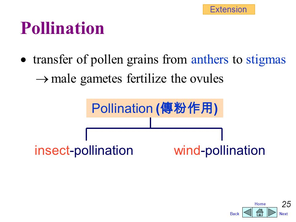 Pollination  transfer of pollen grains from anthers to stigmas