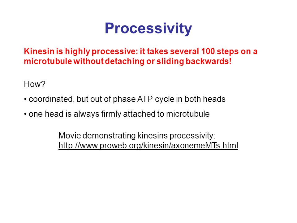Processivity Kinesin is highly processive: it takes several 100 steps on a microtubule without detaching or sliding backwards!